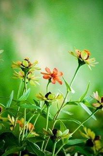 Foto by ikim